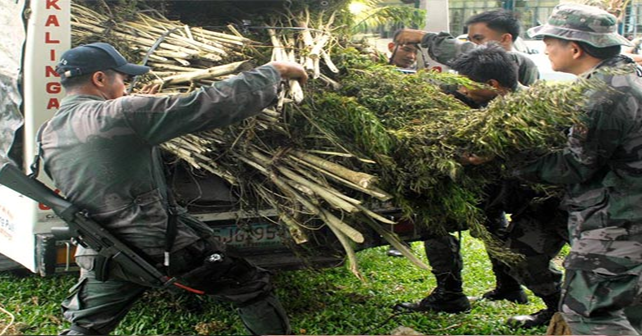 Agents of the Philippine Drug Enforcement Agency load seized crops of marijuana into their vehicle. Photo by The Philippine Star.